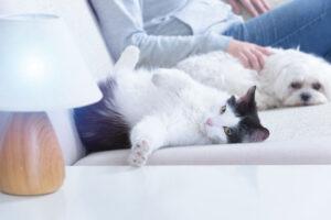 formation vétérinaire